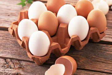 با تخم مرغ  زیبایی را به پوست خود هدیه کنید